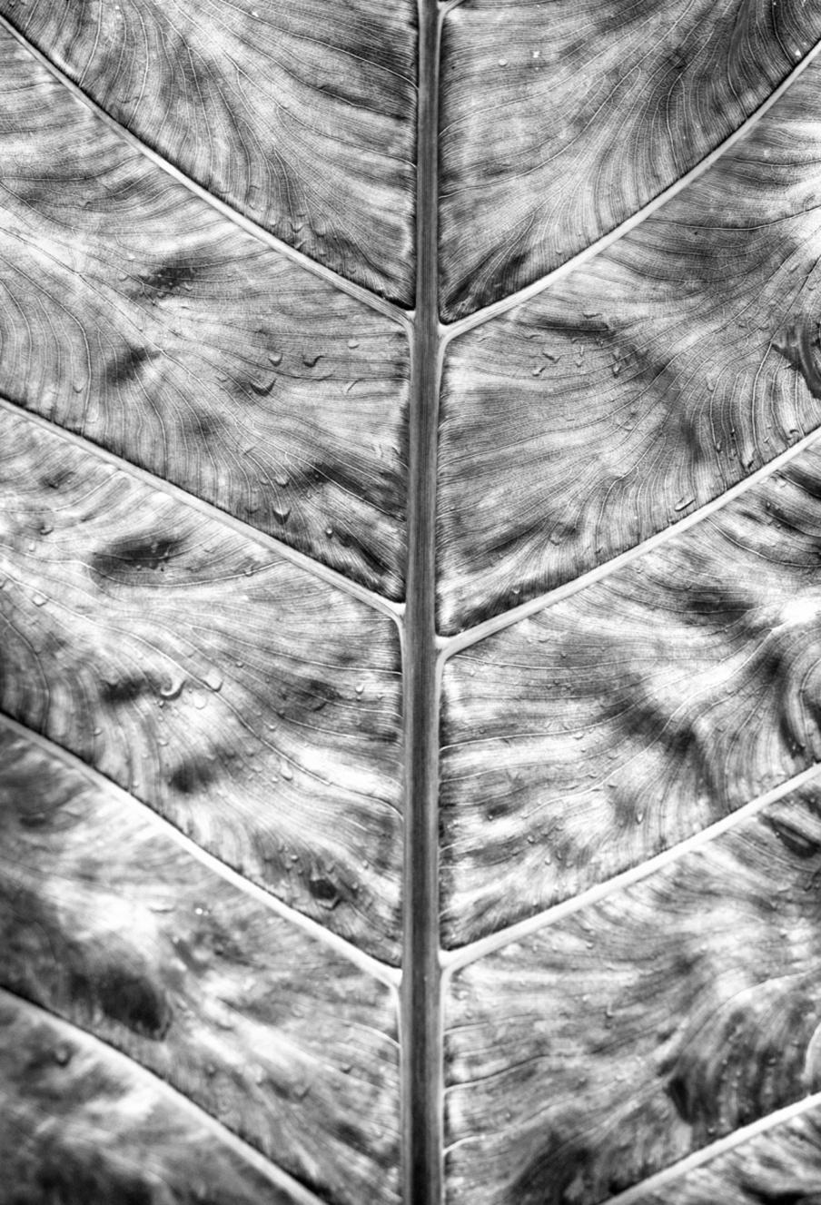 Lehtivihreä